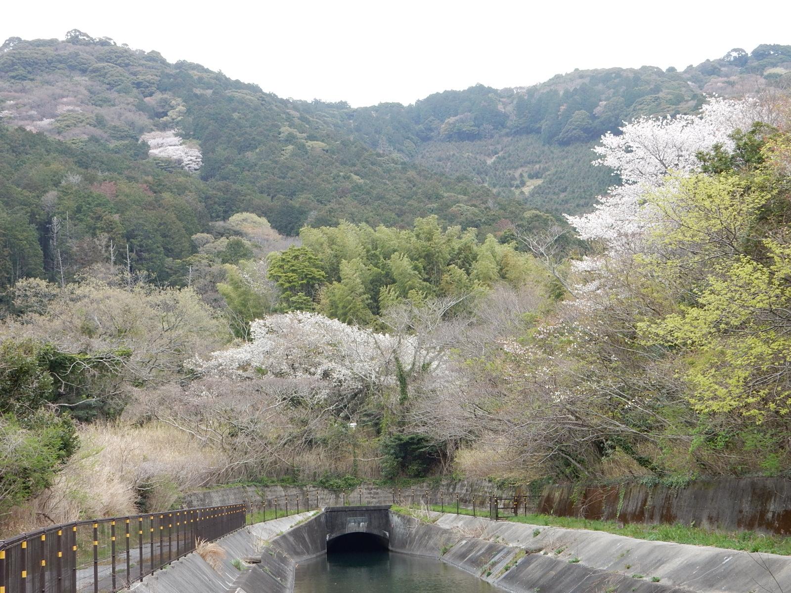 <p>2021年3月撮影<br /> 二川第1開水路と山桜</p>
